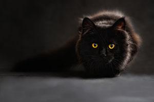 photography cat 1